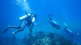 Treatment Success for Sick Turks and Caicos Corals Aliz Zimmerman