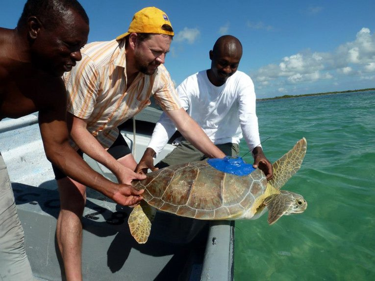Peter Richardson, fisherman Gilbert Jennings and DECR's Luc Clerveaux about to release a satellite-tagged teenage green turtle
