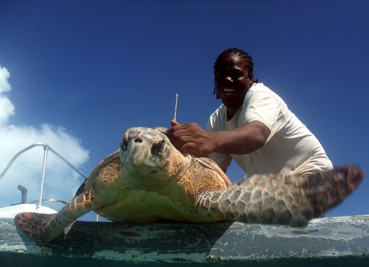 TCI Government Conservation Officer Tommy Phillips about to release satellite-tagged adult male Hawksbill JERRY