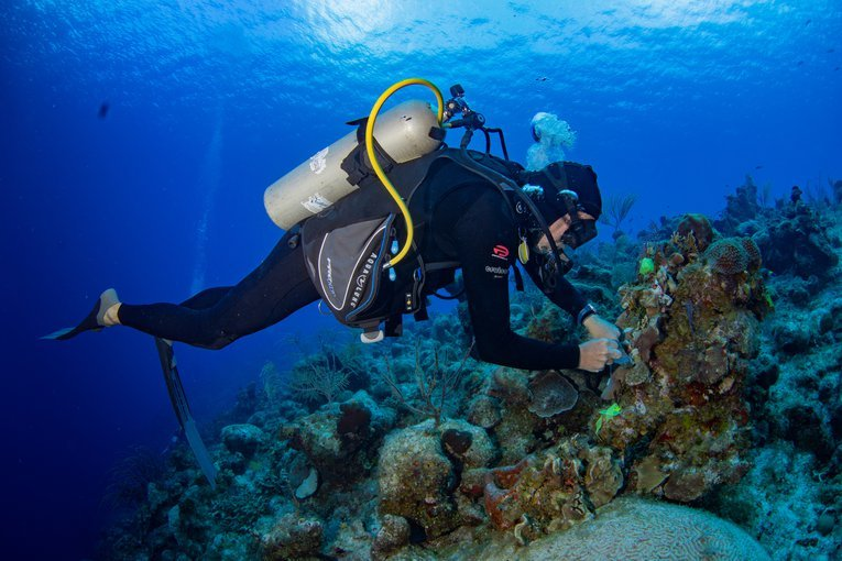 Treating corals for SCTLD