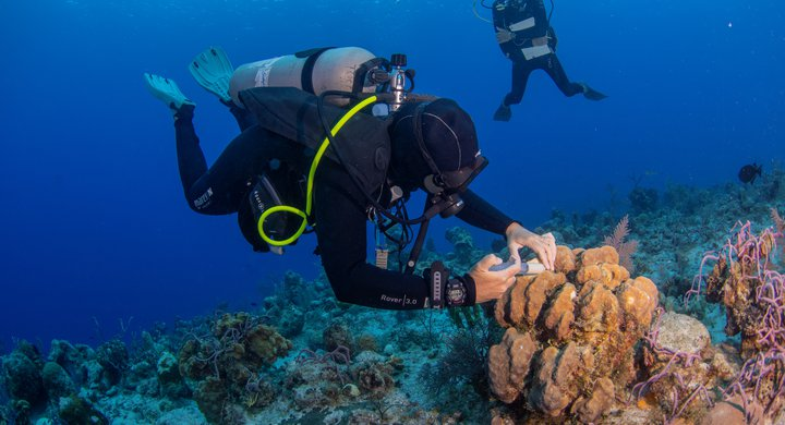 Applying treatments on reefs affected by SCTLD