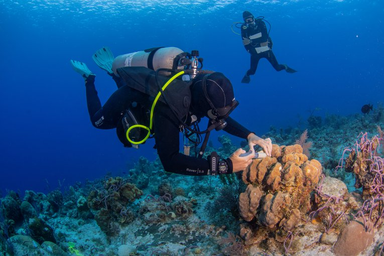 Applying treatments on reefs afected by SCTLD