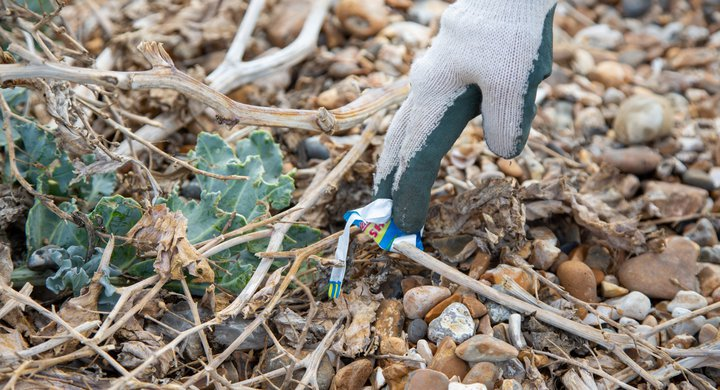 Volunteer picking up beach litter at Great British Beach Clean on Eastney Beach Portsmouth GBBC Billy Barraclough