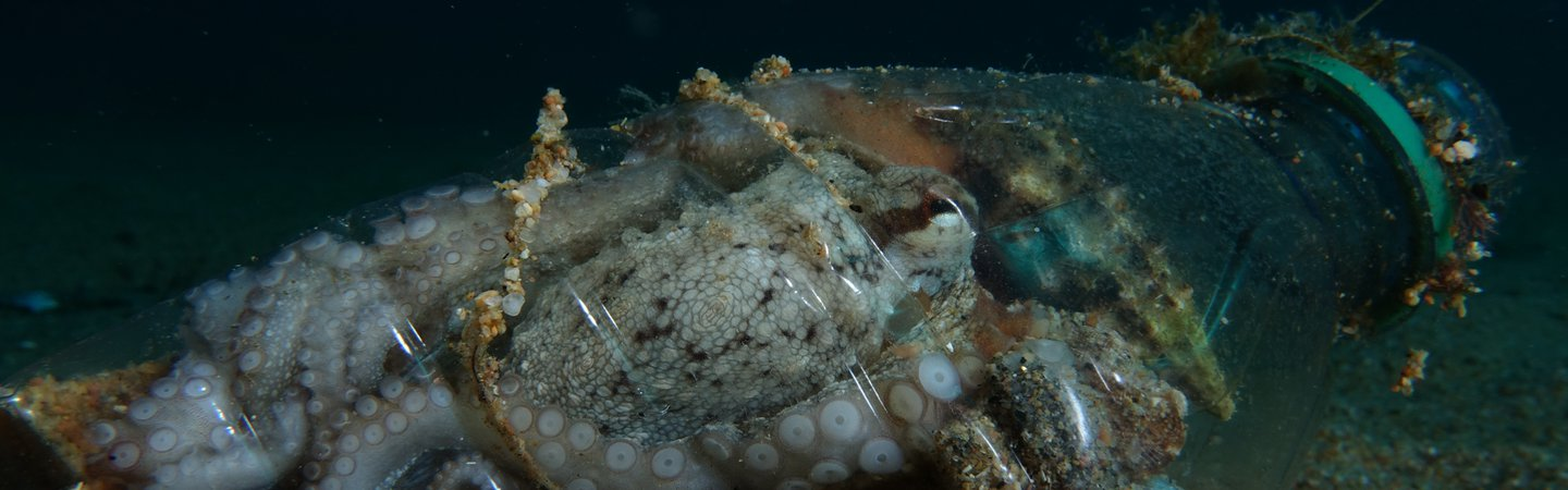 Octopus making a plastic water bottle his home in the Costa Brava Spain Roger Millan