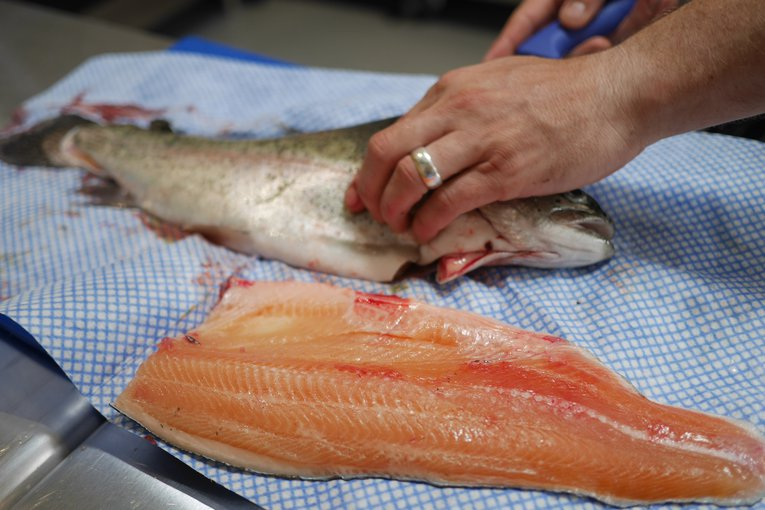 filleting a trout.JPG