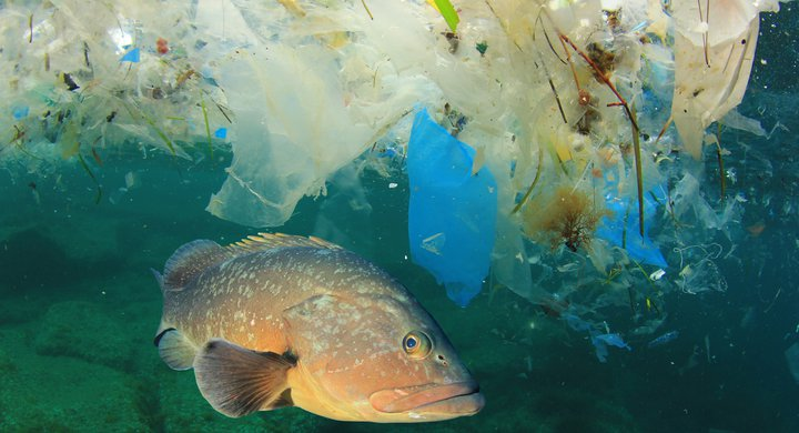 Fish and plastic pollution in the sea Rich Carey
