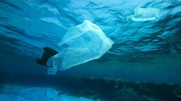 Plastic bags in the ocean Rich Carey