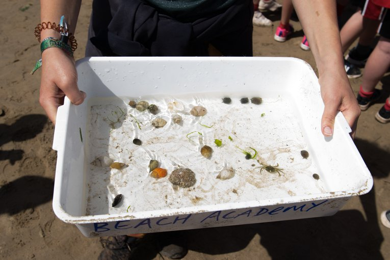 Rockpool finds during CSCU with Oggmore Rougemont school Emma Gascoigne