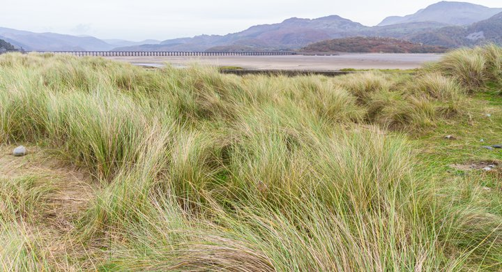 Grass and sand dunes at Mawddach Estuary Fairbourne Wales Andrew Chrisholm