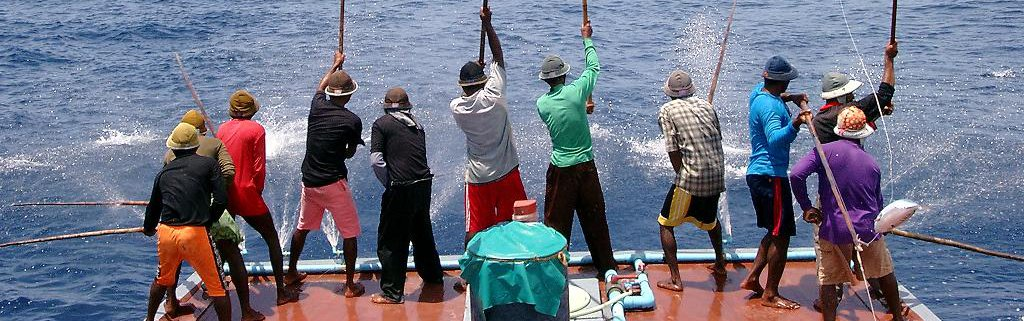 Pole and line Tuna fishing boat Maldives MacAlister Elliot and Partners